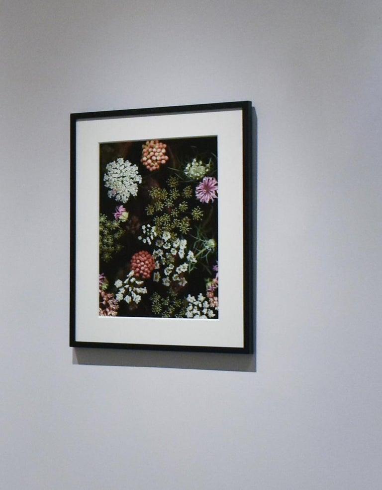 Milkweed Prairie Still Life (Modern Digital Flora Still Life) - Photograph by Lisa A. Frank