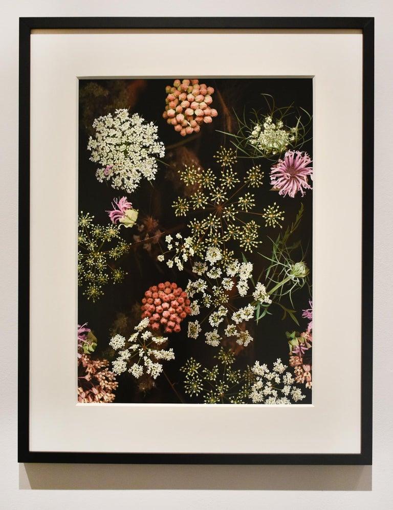 Milkweed Prairie Still Life (Modern Digital Flower Still Life Photograph) - Black Still-Life Photograph by Lisa A. Frank