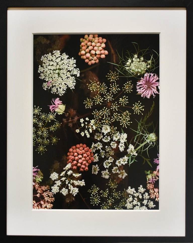 Archival digital scanograph 18 x 13 inches, edition of 225 24.5 x 19.5 inches in black frame with 8-ply white mat and non-glare glass  This contemporary, archival digital scanograph was made by fine art photographer, Lisa Frank, in 2007. The floral