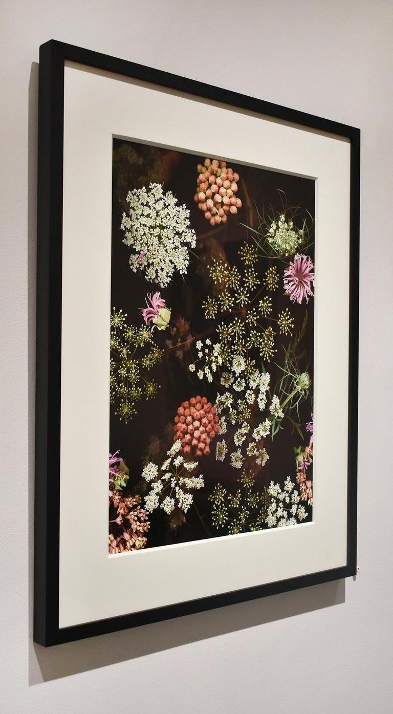 Milkweed Prairie Still Life (Modern Digital Flower Still Life Photograph) For Sale 1