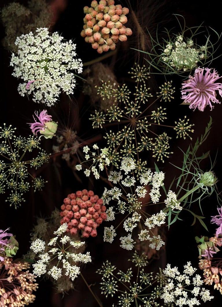 Lisa A. Frank Still-Life Photograph - Milkweed Prairie Still Life (Modern Digital Flower Still Life Photograph)