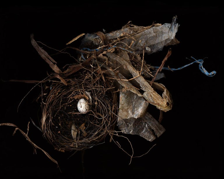 Lisa A. Frank Still-Life Photograph - Nest (Modern Digital Bird Nest Still Life)
