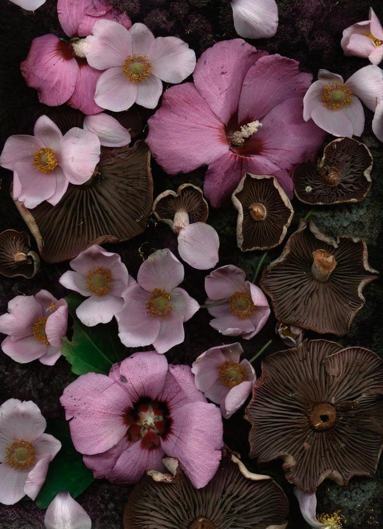 Lisa A. Frank Still-Life Photograph - Russula with Rose of Sharon (Modern Digital Floral/Fungi Still Life)
