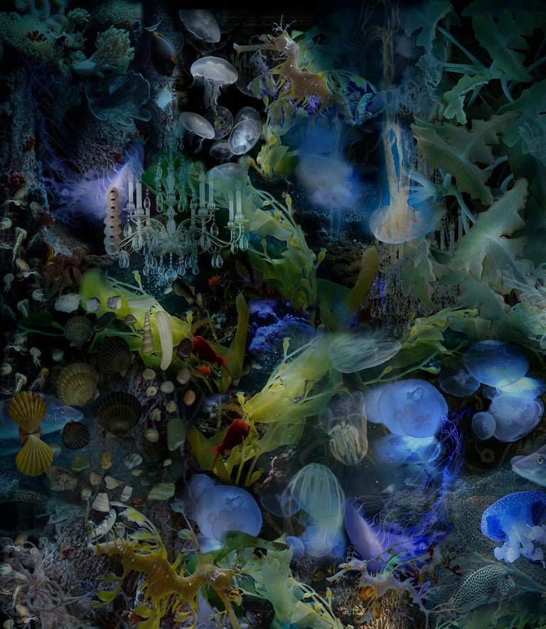 To Cast Aside the Weight of Facts.., Underwater Photo of Fish, Turtle, Seahorse - Contemporary Photograph by Lisa A. Frank