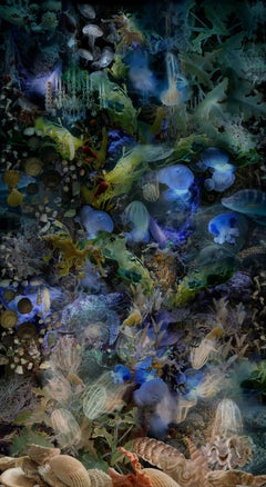 To Cast Aside the Weight of Facts.., Underwater Photo of Fish, Turtle, Seahorse