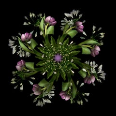 E8.1 (Contemporary British Photography, Flora, Flowers, Digital Photography)