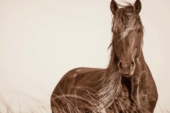 Wavelength by Lisa Cueman. Equine photography. Wild horses of Outer Banks.