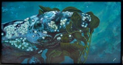 Grey Whale Eating Kelp