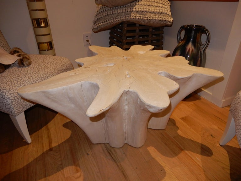 An exceptional Live Edge / Free Edge Bleached Teak Wood Root Coffee Table For Sale 4