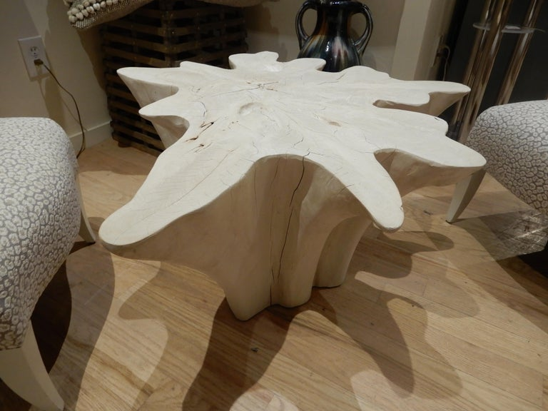 American An exceptional Live Edge / Free Edge Bleached Teak Wood Root Coffee Table For Sale