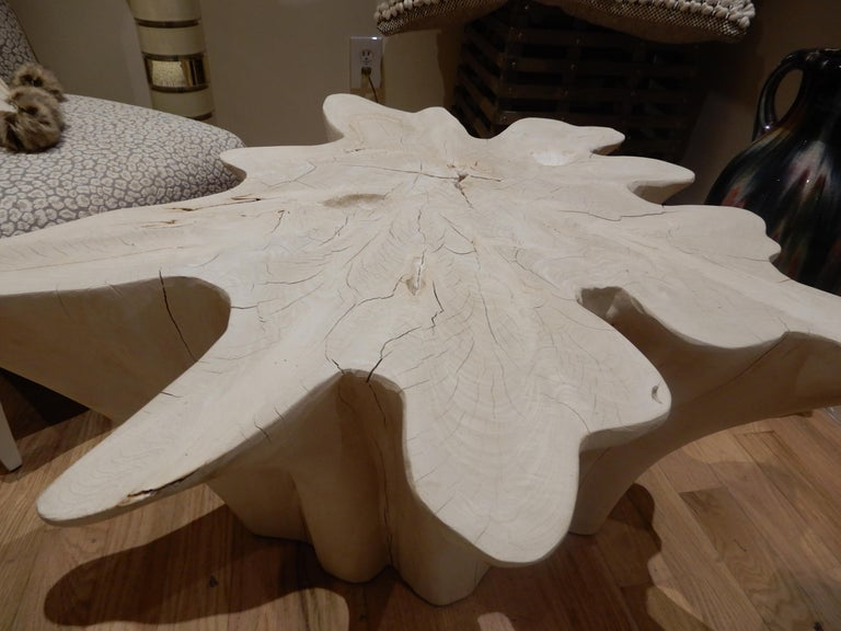 An exceptional Live Edge / Free Edge Bleached Teak Wood Root Coffee Table For Sale 1