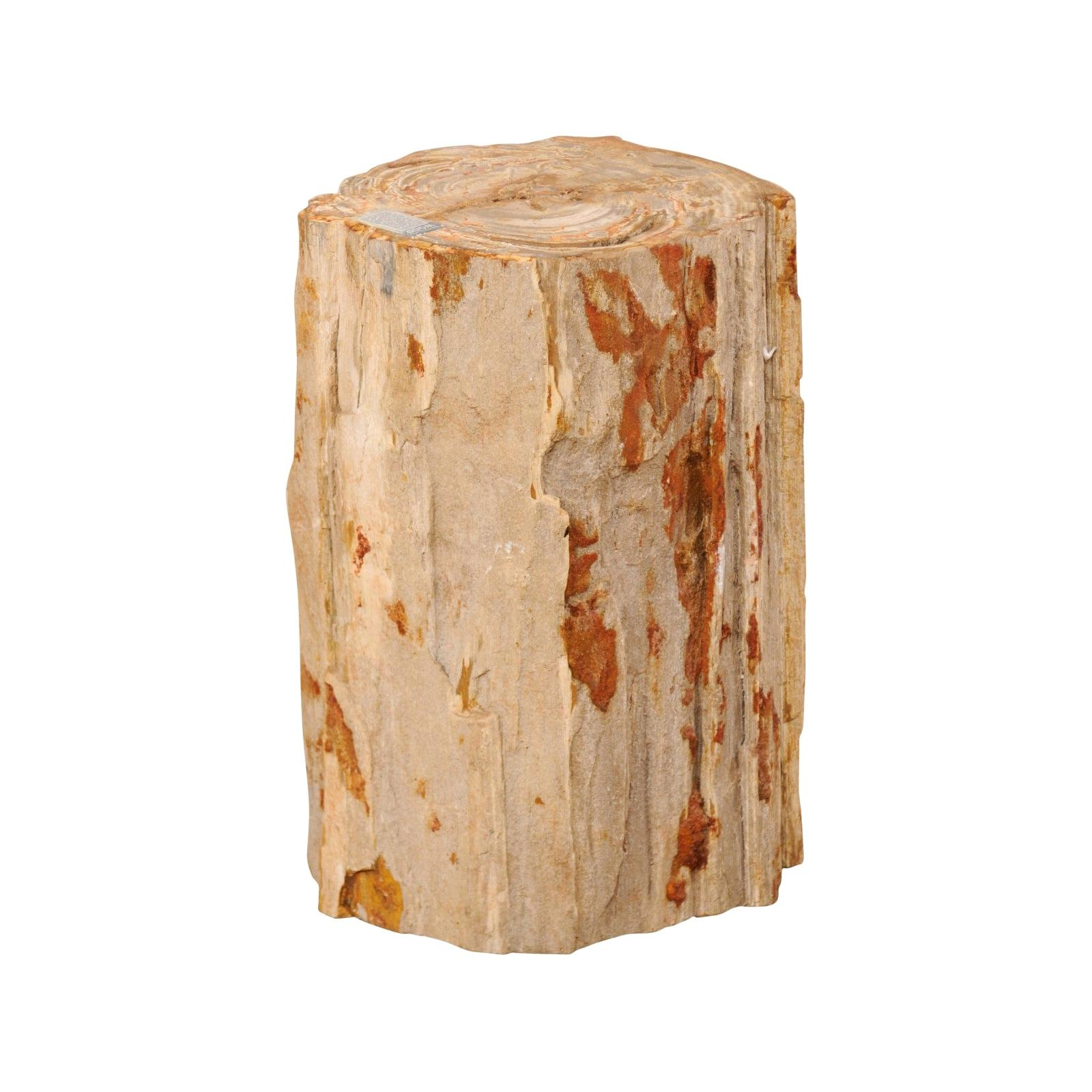 Live-Edge Petrified Wood Stool or Small Drinks Table