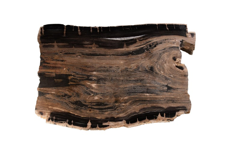 The petrified wood tabletop is sculpted from fossilised wood, each one as unique as the tree that it was originally carved from. Nature designs and dictates scale, encapsulating the organic nature of each piece. Cracks and shade variations as well
