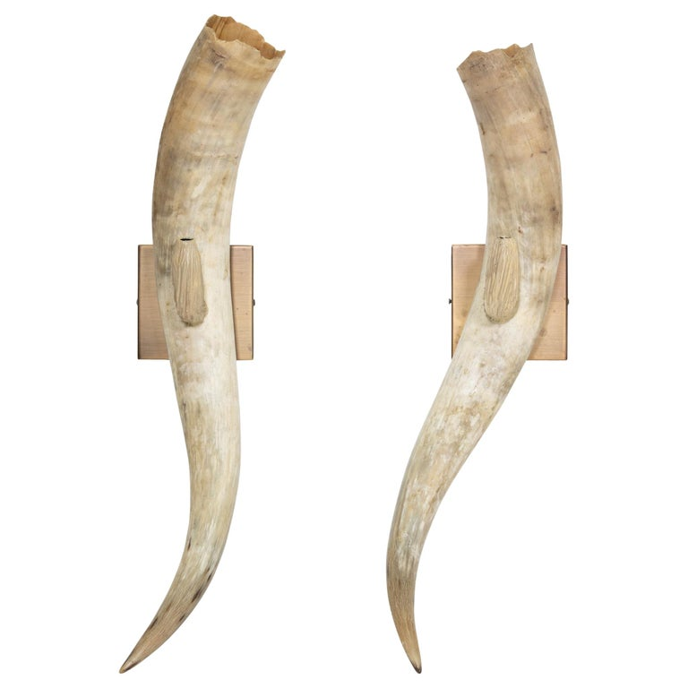 Longhorn Wall Sconces For Sale