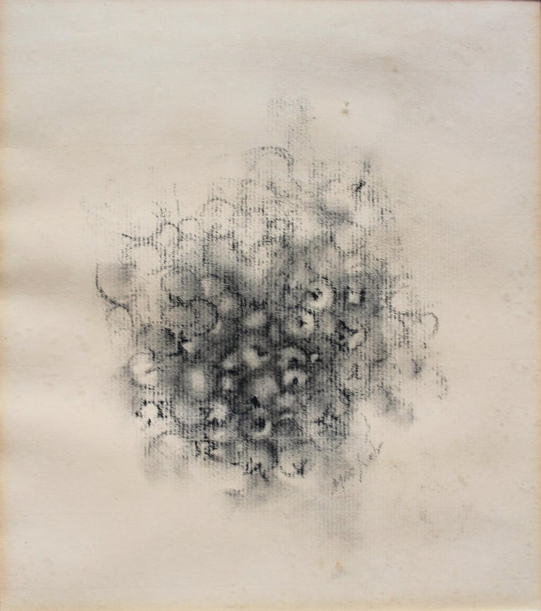 Loren Maciver (American 1909-1998) drawing of berries conte crayon on pastel paper. APF Matted and framed 13 5/8