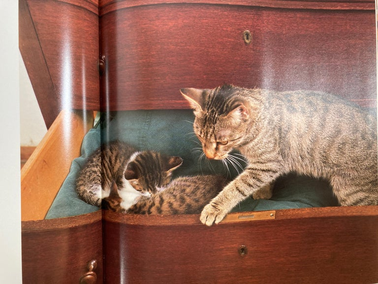 Paper Love of Cats by Tom Howard Hardcover Book For Sale