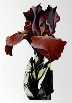 Burgundy Iris, Silkscreen by Lowell Nesbitt