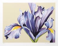 Iris on Beige