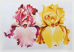 Pink and Yellow Irises