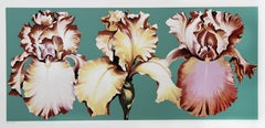 Three Irises on Green