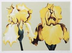 Two Yellow Irises on Sage II