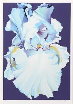 White Iris on Purple