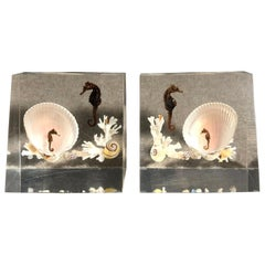 Lucite and Sea Shell Bookends with Seahorse
