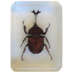Lucite Encased Beetle Decorative Object, circa 1970s