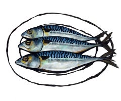 Lucy Routh, Three Mackerel, Limited Edition Print, Contemporary Still Life Art