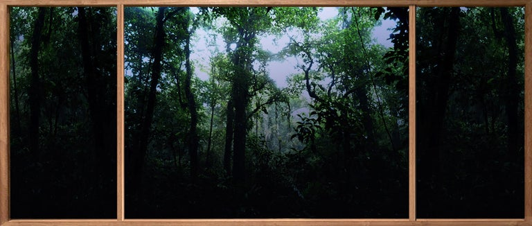 """Lujan Candria Landscape Photograph - From the series """"Roots to Branches #13"""", Edition of 5"""