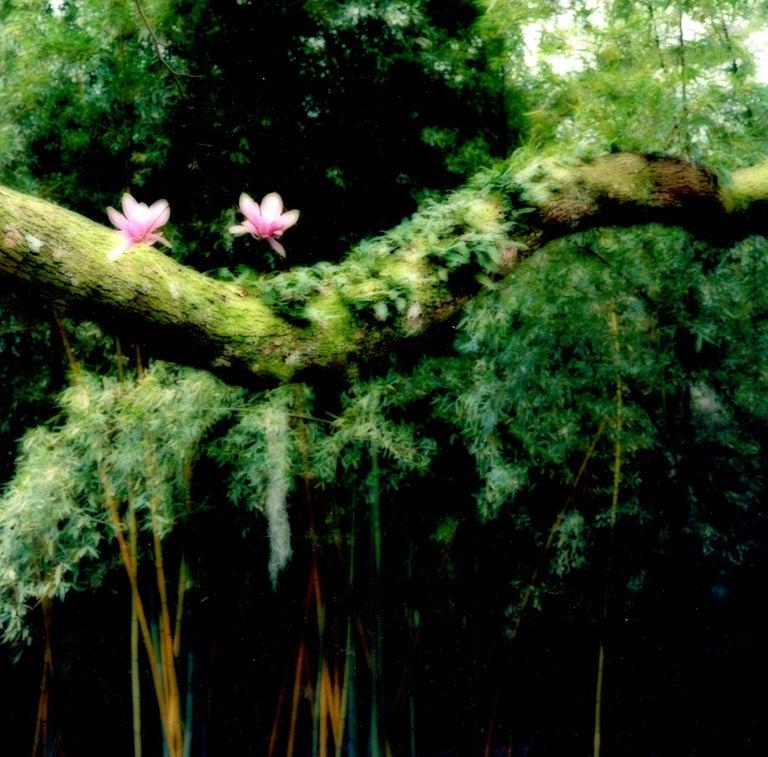Avery Island, Louisiana, 2007 [2-07-14c-9]