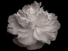 "Photography - large scale abstract black and white ""Flower series - PEONY"""