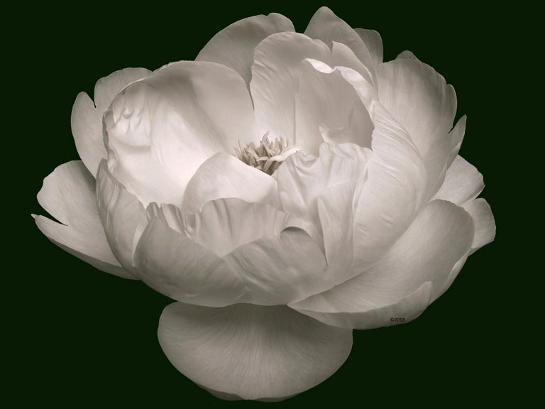 MAE Curates Landscape Photograph - Zen Beauty - Contemporary black and white photography of Flower series - medium