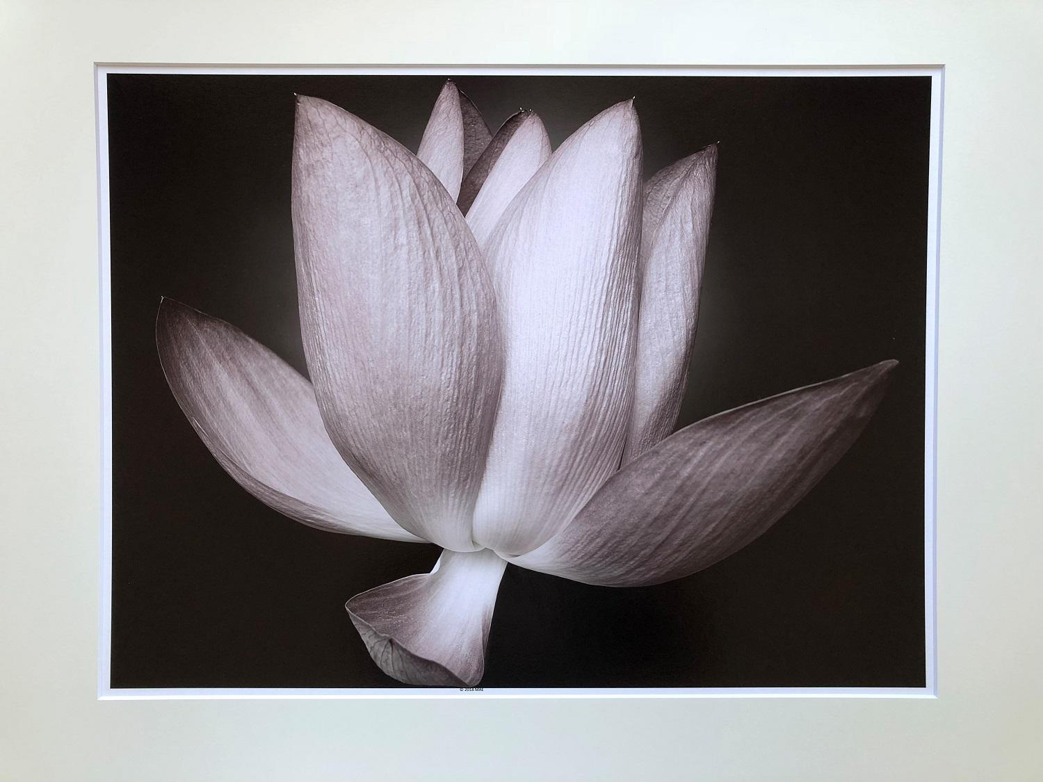 Mae Curates Zen Beauty Contemporary Floral Still Life Flower