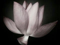 Zen Beauty - Contemporary Floral Still Life - Flower photography series - Lotus