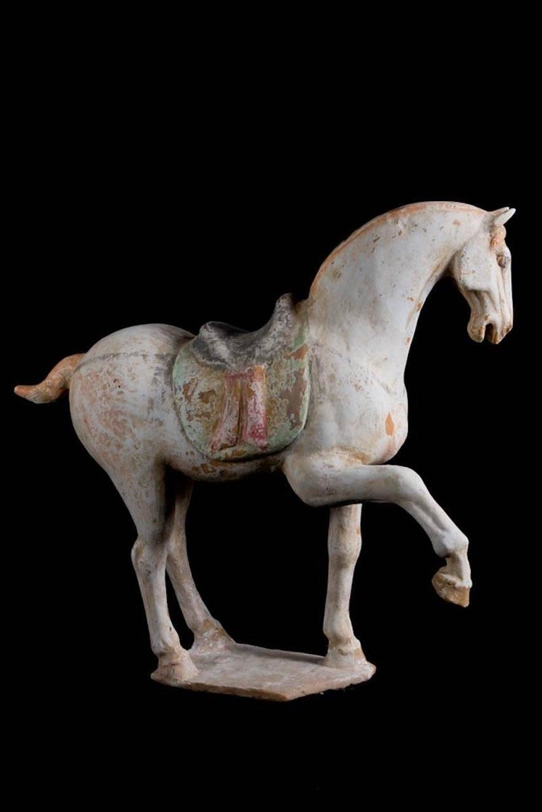 Magnificent prancing horse in orange terracotta with traces of polychrome paint. Springing its right leg with a lively position and an expressive look. With a finely decorated saddle. This piece is provided with a Thermoluminescence Test from Ralph