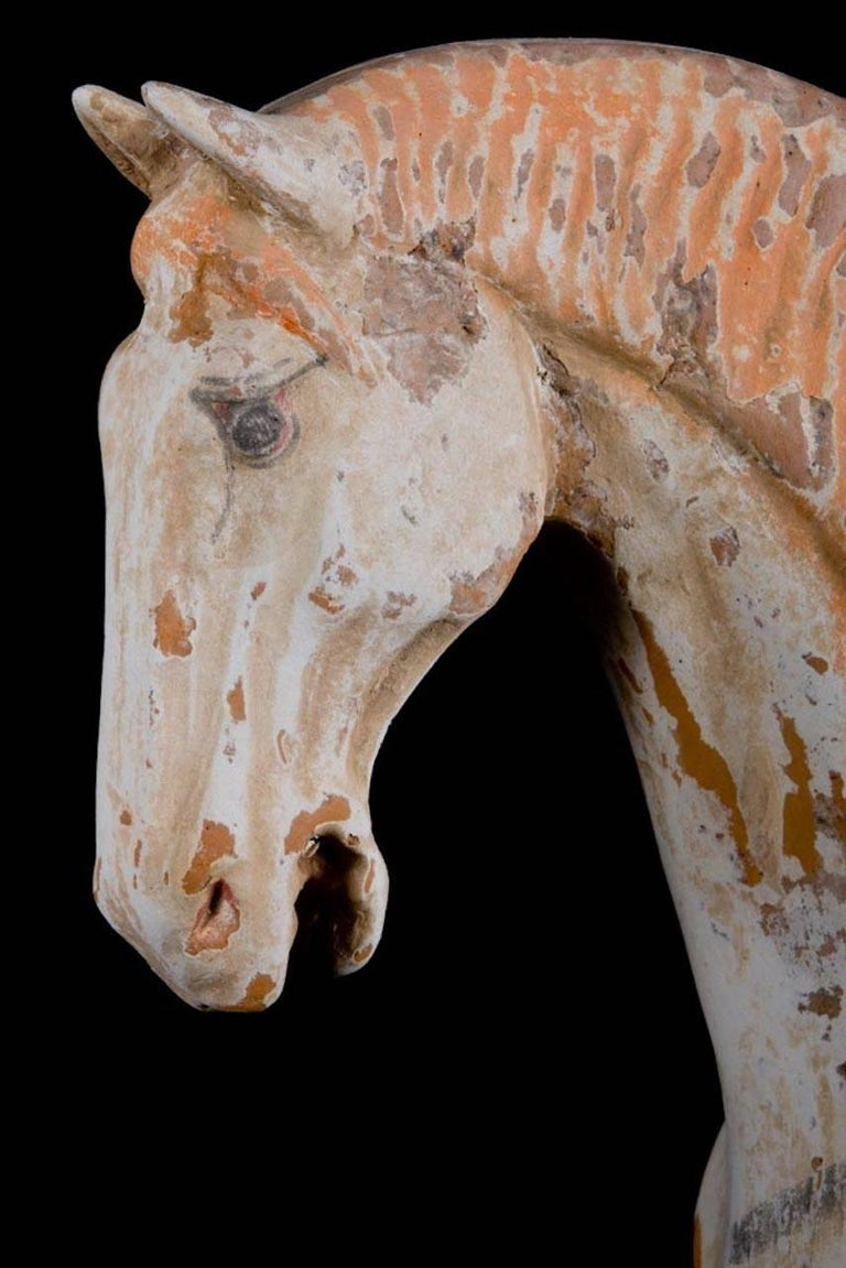 Majestic Prancing Horse, Tang Dynasty, China '618-907 AD', TL Test by Kotalla For Sale 1