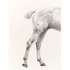 Mali Moir Horses 'Hunting' - Glutaeus Magnificus Charcoal on Canvas 2015