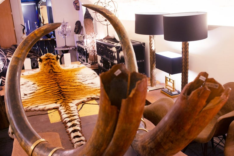 Mammoth Pair of Big Tusks For Sale 4