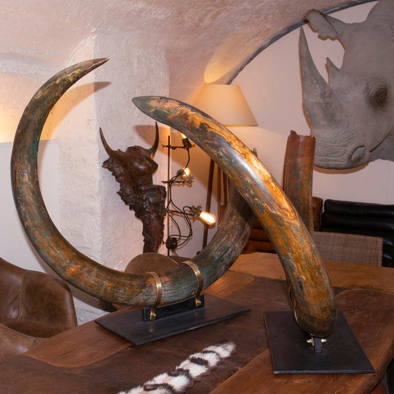 Mammoth Pair of Big Tusks In Excellent Condition For Sale In Paris, FR