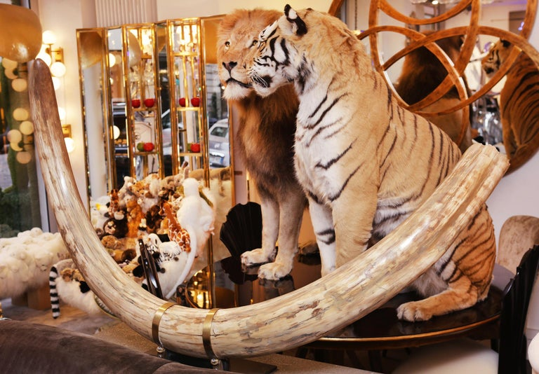 Russian Mammoth Pure Ivory Big Tusk For Sale