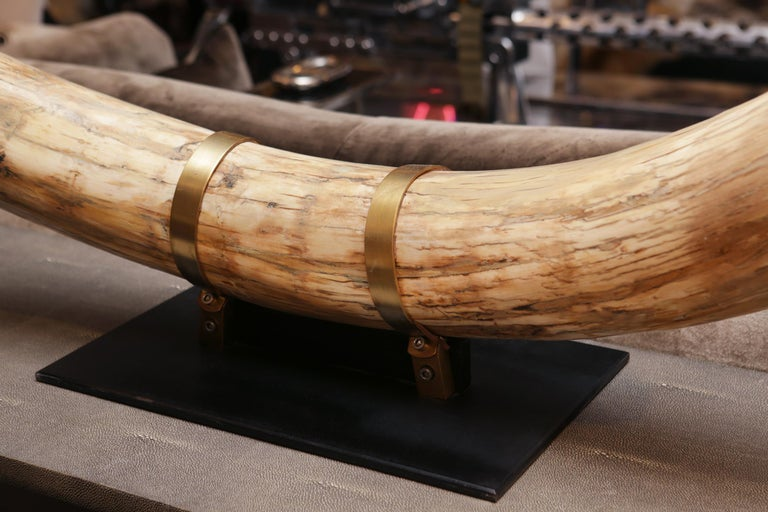 Mammoth Pure Ivory Big Tusk For Sale 2