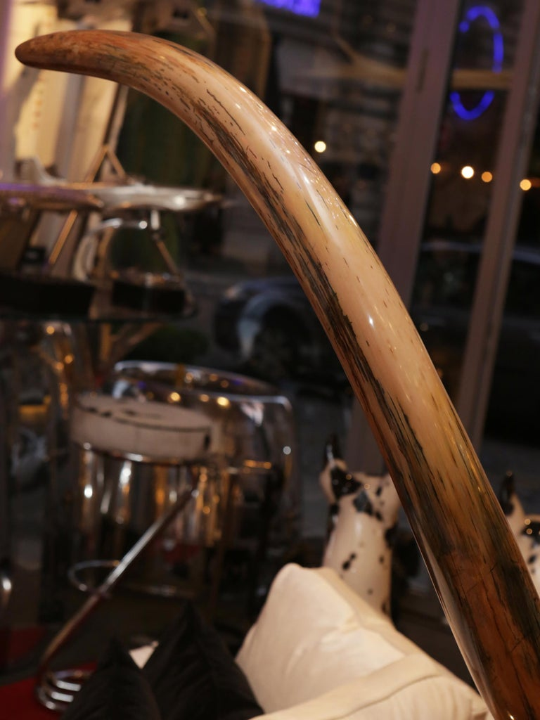 Mammoth Tusk Large For Sale 4