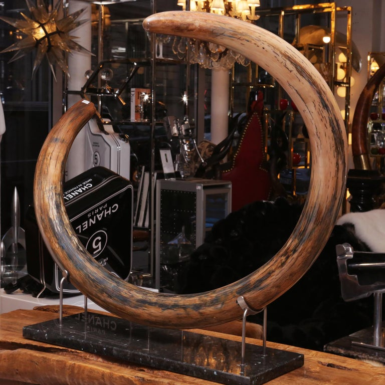 18th Century and Earlier Mammoth Tusk Large For Sale