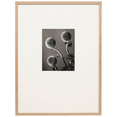 Man Ray Flowers Photography