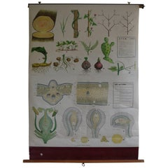 Map from the Biology Classroom 'The Stem, Leaf and Flower'
