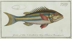 Blue-Striped Gilt Fish Engraving
