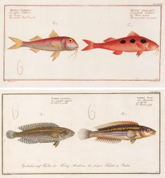 Pair of Fish Engravings