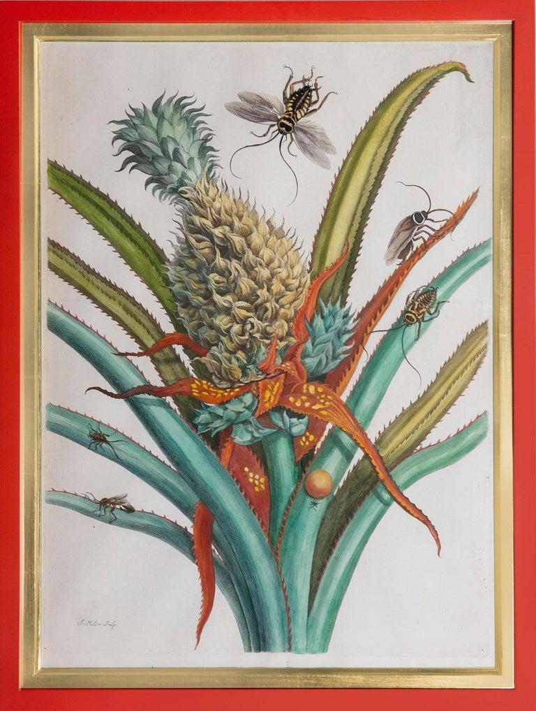 Maria Sybilla Merian Still-Life Print - Pineapple with foliage.