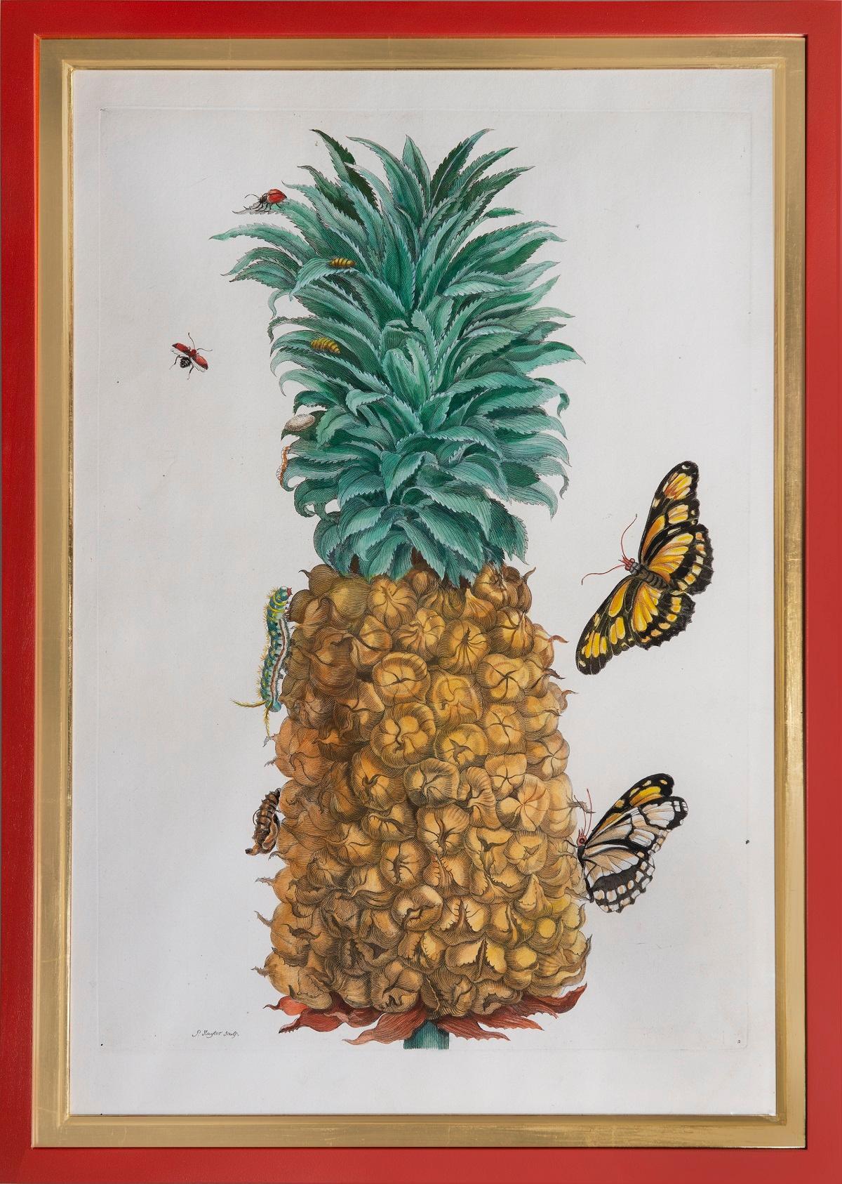 The Pineapple Fruit.